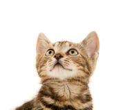Gatinho bonito do gato malhado Fotos de Stock Royalty Free