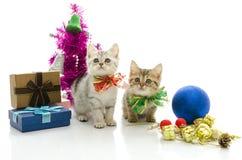 Gatinho bonito do gato malhado com presente Fotos de Stock