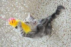 Gatinho bonito do gato malhado que joga o brinquedo Fotografia de Stock Royalty Free