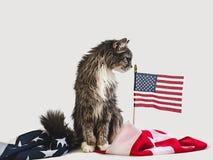 Gatinho bonito e bandeira americana Sess?o fotogr?fica do est?dio fotos de stock