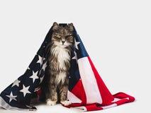 Gatinho bonito e bandeira americana Sess?o fotogr?fica do est?dio foto de stock royalty free