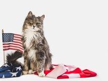Gatinho bonito e bandeira americana Sess?o fotogr?fica do est?dio imagens de stock royalty free