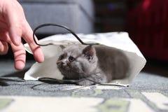 Gatinho bonito em um saco de compras Fotos de Stock