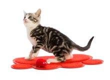 Gatinho bonito em um tapete vermelho sob a forma de uma pata Foto de Stock