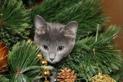 Gatinho bonito escalado na árvore de Natal Imagens de Stock Royalty Free