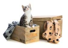 Gatinho bonito na caixa de madeira Imagens de Stock
