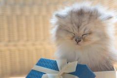 Gatinho bonito na caixa de presente fotografia de stock