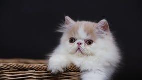 Gatinho bonito na cesta de vime video estoque