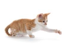 Gatinho bonito no branco Fotografia de Stock