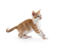 Gatinho bonito no branco Fotografia de Stock Royalty Free