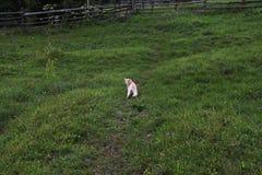 Gatinho bonito no prado Fotografia de Stock Royalty Free