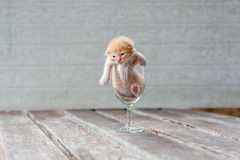 Gatinho bonito no vidro de vinho com fundo textured Imagem de Stock