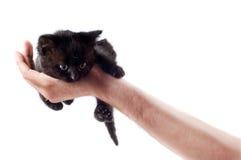 Gatinho bonito pequeno Imagens de Stock