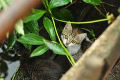 Gatinho bonito que espreita fora dos arbustos Esconder na sombra e na grama imagem de stock
