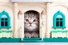 Gatinho bonito que joga na casa do brinquedo Fotos de Stock