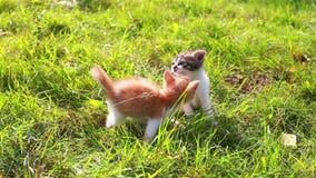 Gatinho bonito que joga no jardim filme