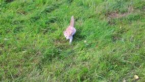 Gatinho bonito que joga no jardim video estoque