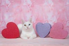 Gatinho branco com heterochromia com as caixas do ` d do tema do ` s do Valentim Fotografia de Stock Royalty Free