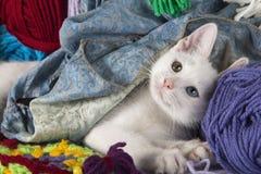 Gatinho branco doce Imagem de Stock Royalty Free
