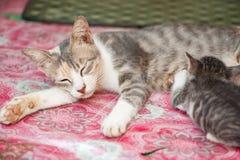 Gatinho branco e bonito preto pequeno Imagem de Stock