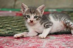 Gatinho branco e bonito preto pequeno Imagens de Stock Royalty Free