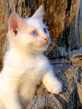 Gatinho branco na árvore Fotografia de Stock Royalty Free