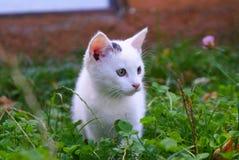 Gatinho branco na grama fotos de stock