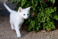 Gatinho branco no jardim Fotos de Stock Royalty Free