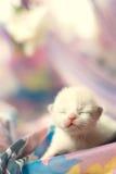 Gatinho branco pequeno com os olhos fechados Fotos de Stock