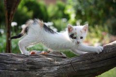 Gatinho branco pequeno que risca o ramo de árvore fotos de stock