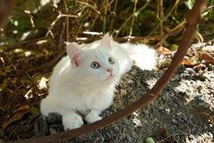 Gatinho branco que encontra-se na terra no jardim entre os ramos marrons das plantas fotos de stock royalty free