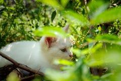 Gatinho branco que esconde sob as árvores imagens de stock
