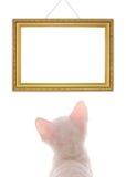 Gatinho branco que olha o frame vazio Imagens de Stock Royalty Free