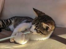 Gatinho brincalhão do gato de gato malhado foto de stock