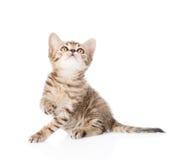 Gatinho brincalhão do gato malhado que olha acima Isolado no fundo branco Foto de Stock
