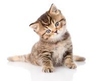 Gatinho britânico do gato malhado do bebê que senta-se na parte dianteira Isolado no branco Imagem de Stock