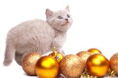 Gatinho britânico que joga com a decoração do ano novo Imagem de Stock Royalty Free
