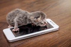 Gatinho cego recém-nascido pequeno perto de um telefone celular Chamando a mamã pela pilha imagem de stock royalty free