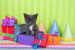 Gatinho cinzento e branco do gato malhado em umas caixas do aniversário Imagens de Stock Royalty Free