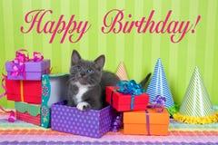 Gatinho cinzento e branco do gato malhado em umas caixas do aniversário Fotos de Stock Royalty Free