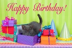 Gatinho cinzento e branco do gato malhado em umas caixas do aniversário Foto de Stock