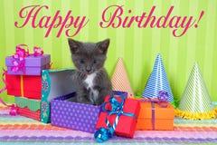 Gatinho cinzento e branco do gato malhado em umas caixas do aniversário Imagens de Stock