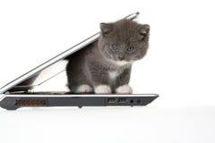 Gatinho cinzento e um portátil Foto de Stock Royalty Free