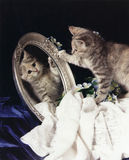 Gatinho cinzento no espelho Fotos de Stock Royalty Free