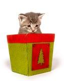Gatinho cinzento no potenciômetro de flor do Natal fotografia de stock