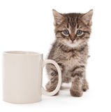 Gatinho com copo de café Fotos de Stock