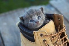 Gatinho com cor fumarento e olhos azuis na bota, na natureza Foto de Stock