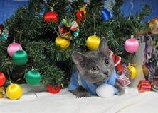 Gatinho de encontro com decorações do Natal Imagens de Stock Royalty Free