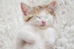 Gatinho de encontro do sono Imagens de Stock Royalty Free
