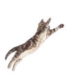 Gatinho de voo ou de salto do gato isolado no branco fotos de stock royalty free